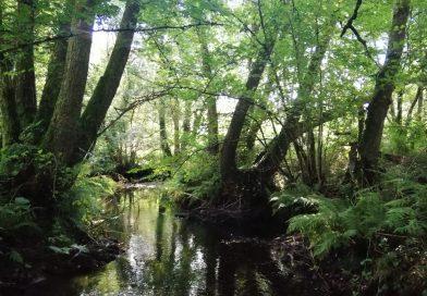 Moody Brook