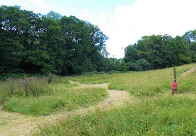 Hay meadow. biodiversity, woods, fire point